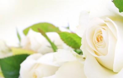 roses_deces