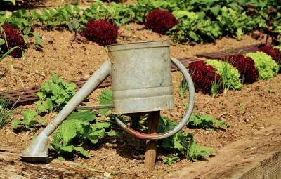 garden-1033574_960_720