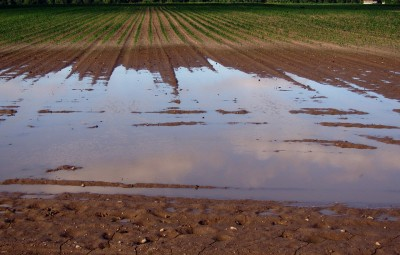 agriculture-pluie-humide