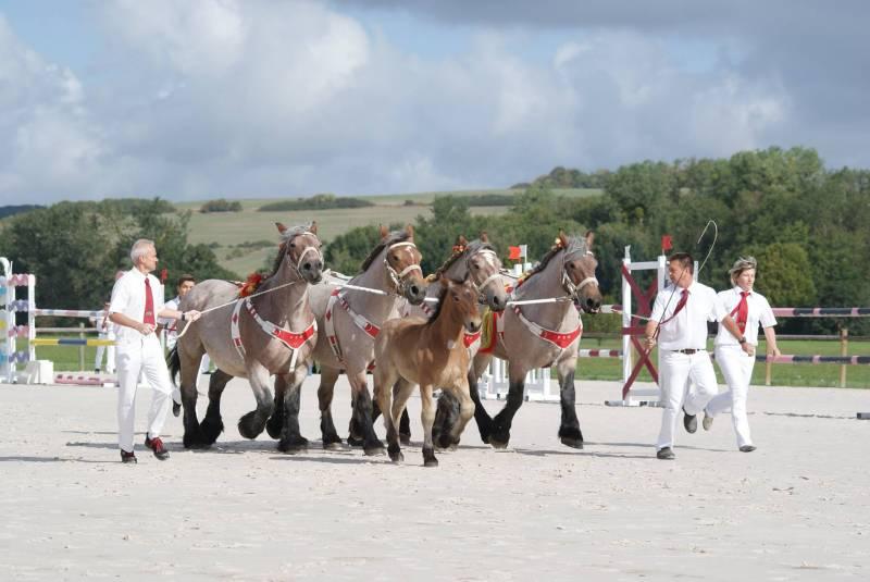 chevaux-ardennais