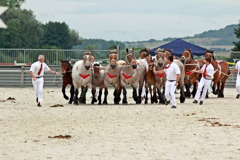 concours-ardennai-Vittel (5)