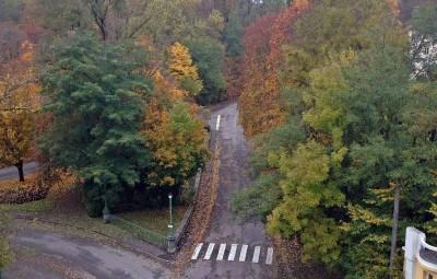 feuilles-routes