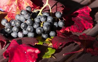 wine-1729460_960_720
