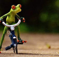 frog-1701109_960_720
