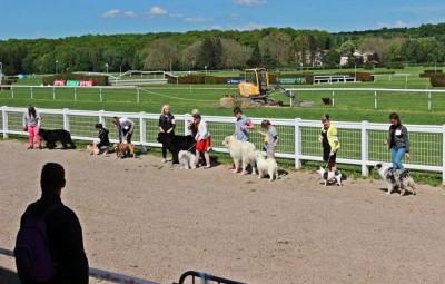 expo-canine-vittel (1)