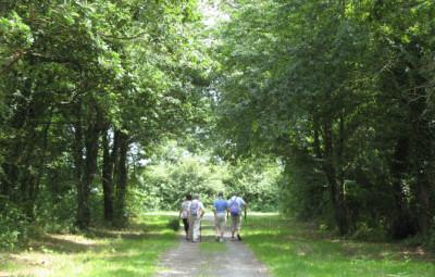 Promenade_Forêt-670x460