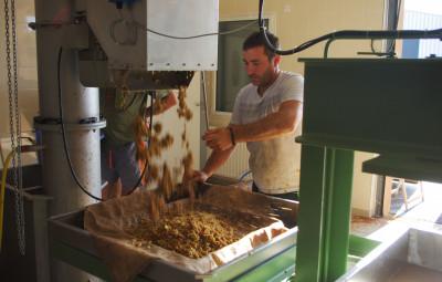 Récupération des pommes broyées qui sont mises en couche pour le pressage.