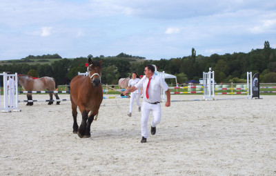Concours national des chevaux ardennais.