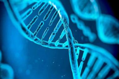 ADN-383x255