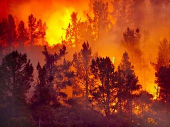 L'été, un rien peut déclencher un feu de forêt. (Illustration)
